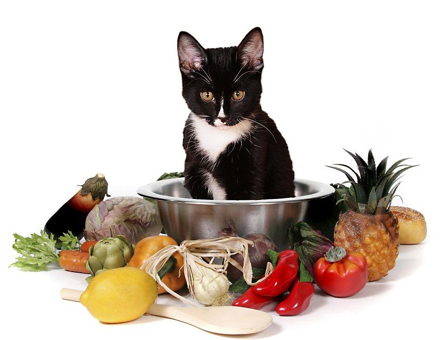 Cat Eating Plants Vomiting
