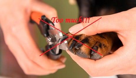 Hazards of cutting dog's nails