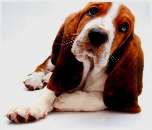 Medium Dogs for sale
