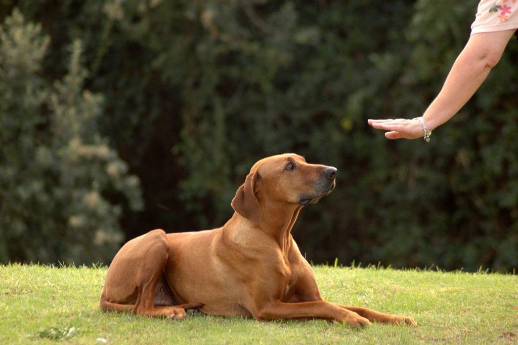 http://megamascota.hiperarticulos.com/wp-content/uploads/2017/04/Dog-Training-1.jpg