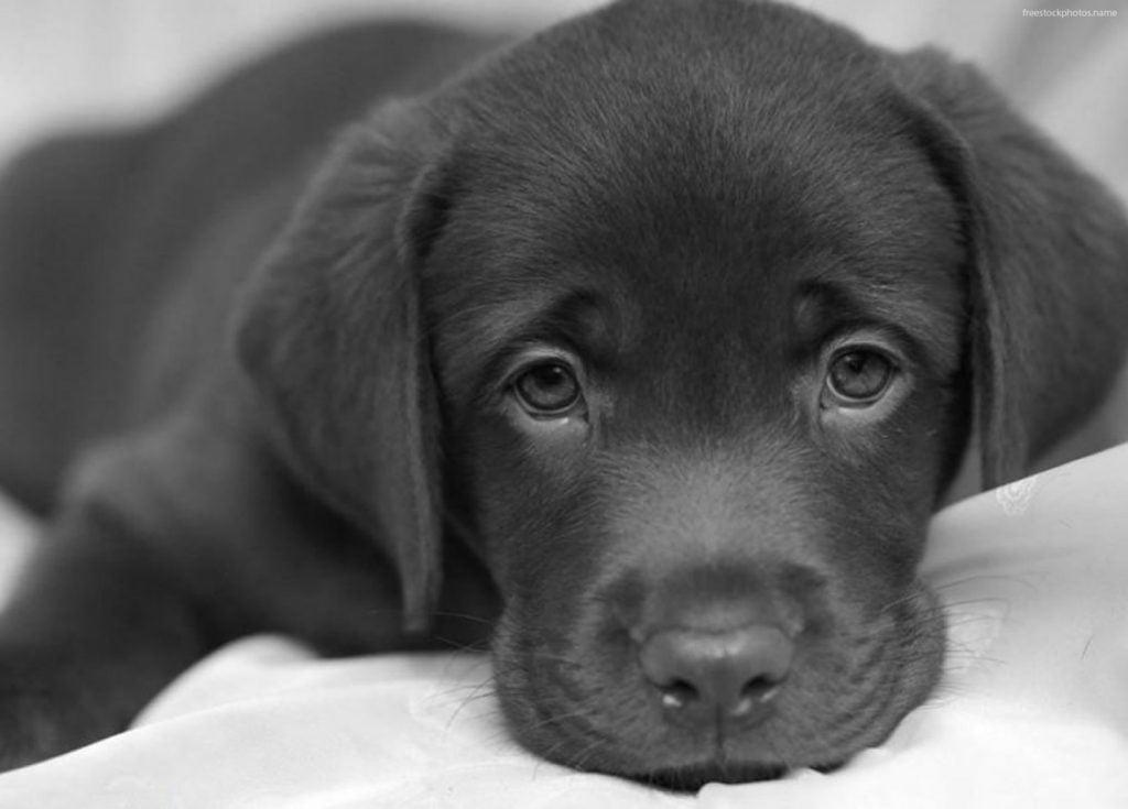 tender dogs