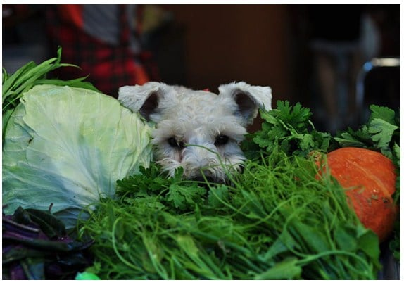 fruits and vegetables for your dog
