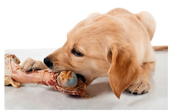 What are the Dangerous Foods for your Dog