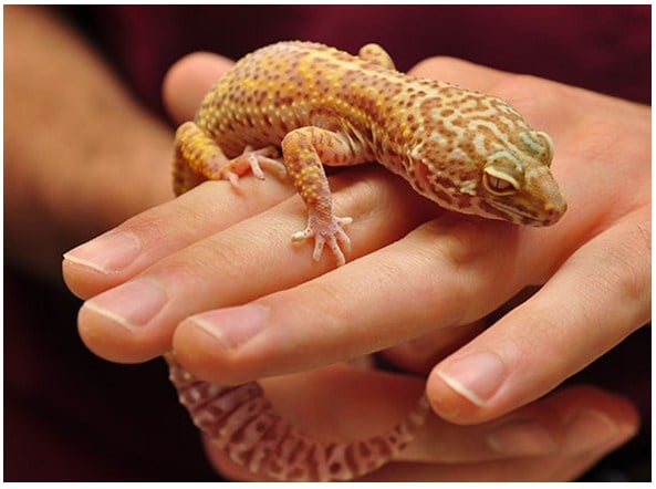 Exotic pets care